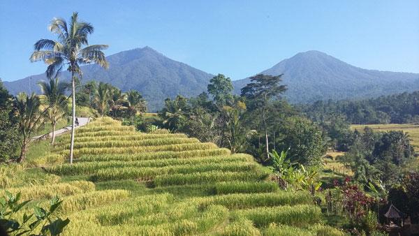 rizières jatiluwih bali